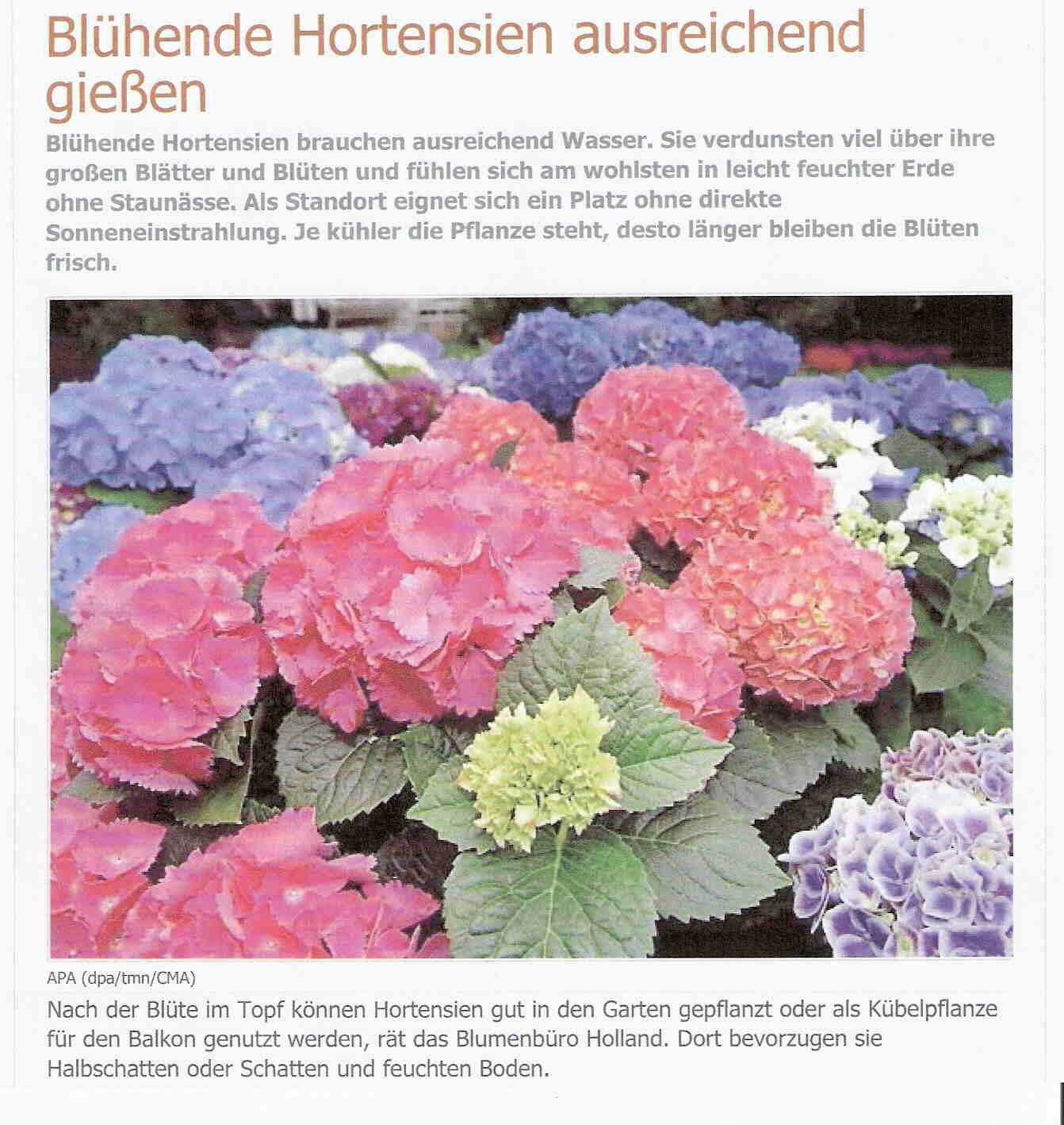 Gartentipp 100611